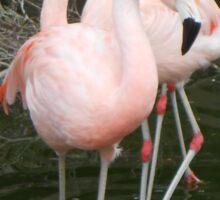 Us Flamingos Sticker
