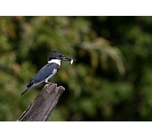 Belted Kingfisher with fish Photographic Print