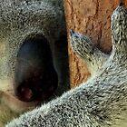 Australian Koala by sandysartstudio