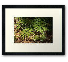 Sunlit Forest Floor Treasures Framed Print