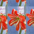 Tania's Happy Hippy plants - Hippeastrum by KazM