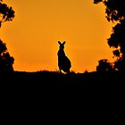Kangaroo Silhouette by Heath Raymond