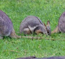 Rock Wallaby Sticker