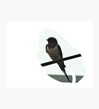 Swallow Leaf Design Photographic Print