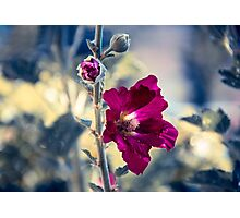 Beautiful blossom on a day in summer Photographic Print