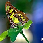 Butterfly on Green Leaves by TJ Baccari Photography