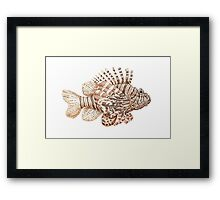Lionfish illustration, pen and ink Framed Print