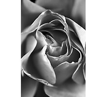Rose Macro in Monochrome Photographic Print