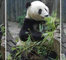 Panda Feast Sticker