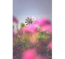 Rural Windmill Photographic Print