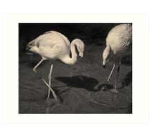 Two Flamingos Toned Art Print