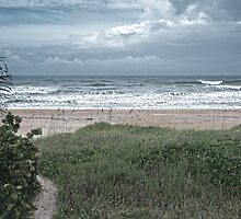 Flagler Beach Path by designingjudy