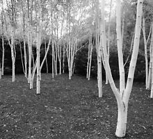 Anglesey Abbey by Tom Hewitt