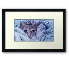 A Cat in a Blanket- Winter Time Framed Print