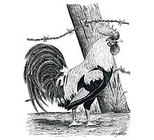Rooster Pen Sketch Photographic Print