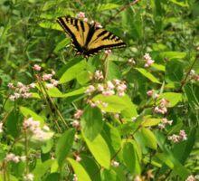 Western Tiger Swallowtail (Papilio Rutulus Lucas) Sticker