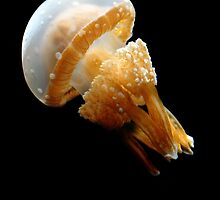 Spotted Jelly Fish by Kerri Ann Crau