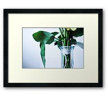 stems Framed Print