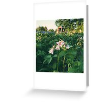 Potato Flowers Greeting Card