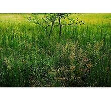 Green Swamp....... Photographic Print