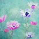 anemones by lucyliu