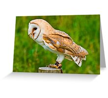 Barn Owl in Jesses Greeting Card