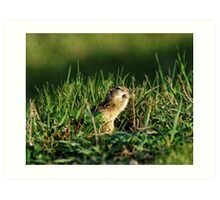 Thirteen-Lined Ground Squirrel Eating Art Print