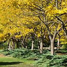 Yellow Trees by Silvia Tomarchio