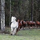 """""""The Herd"""" Horses Coming Home by NaturePrints"""