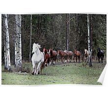 """""""The Herd"""" Horses Coming Home Poster"""