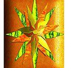 Fruit Skin Star by Lisa Taylor