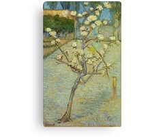 Vincent Van Gogh - Small Pear Tree In Blossom. Still life with flowers: flowers, blossom, nature, botanical, floral flora, wonderful flower, plants, cute plant for kitchen interior, garden, vase Canvas Print