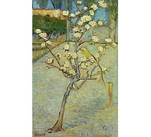 Vincent Van Gogh - Small Pear Tree In Blossom. Still life with flowers: flowers, blossom, nature, botanical, floral flora, wonderful flower, plants, cute plant for kitchen interior, garden, vase Photographic Print
