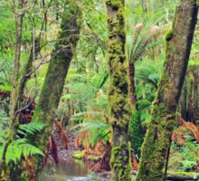 Mt Field National Park - a walk through nature Sticker