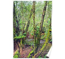 Mt Field National Park - a walk through nature Poster