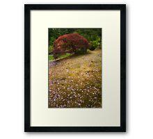 Japanese Maple Tree in Spring Framed Print