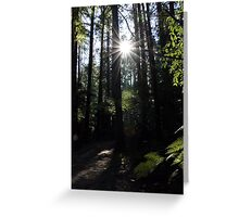 Redwood Forest - Rotorua NZ Greeting Card