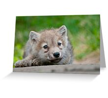 Arctic Wolf Pup Greeting Card