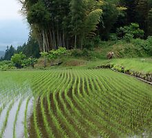 Magome rice field by Chris Allen