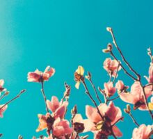 Claremont Blossoms Sticker