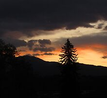 Lone pine in Colorado sunset by dfrahm