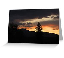 Lone pine in Colorado sunset Greeting Card