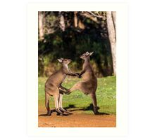 Fighting Kangaroos Art Print