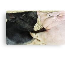 Pigs In Love! Canvas Print