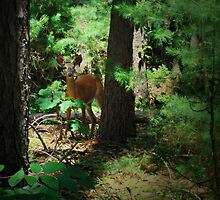 Deer in the Woods by Jill Laquidara