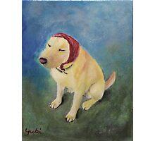 The Babushka Dog Photographic Print