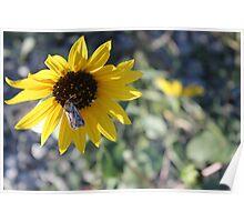 Kansan Sunflower and Moth Poster