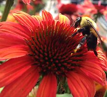 Bumble Bee by Wviolet28
