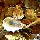 SeaShells by Sharon Davey