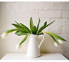 Wilting white tulips Photographic Print